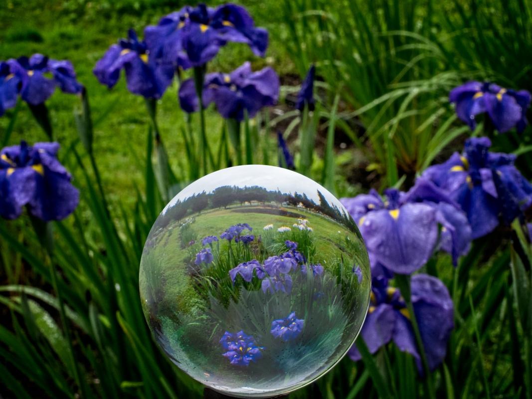 Cascadia-Gardens-Crystal-Ball-Lauren-Heerschap