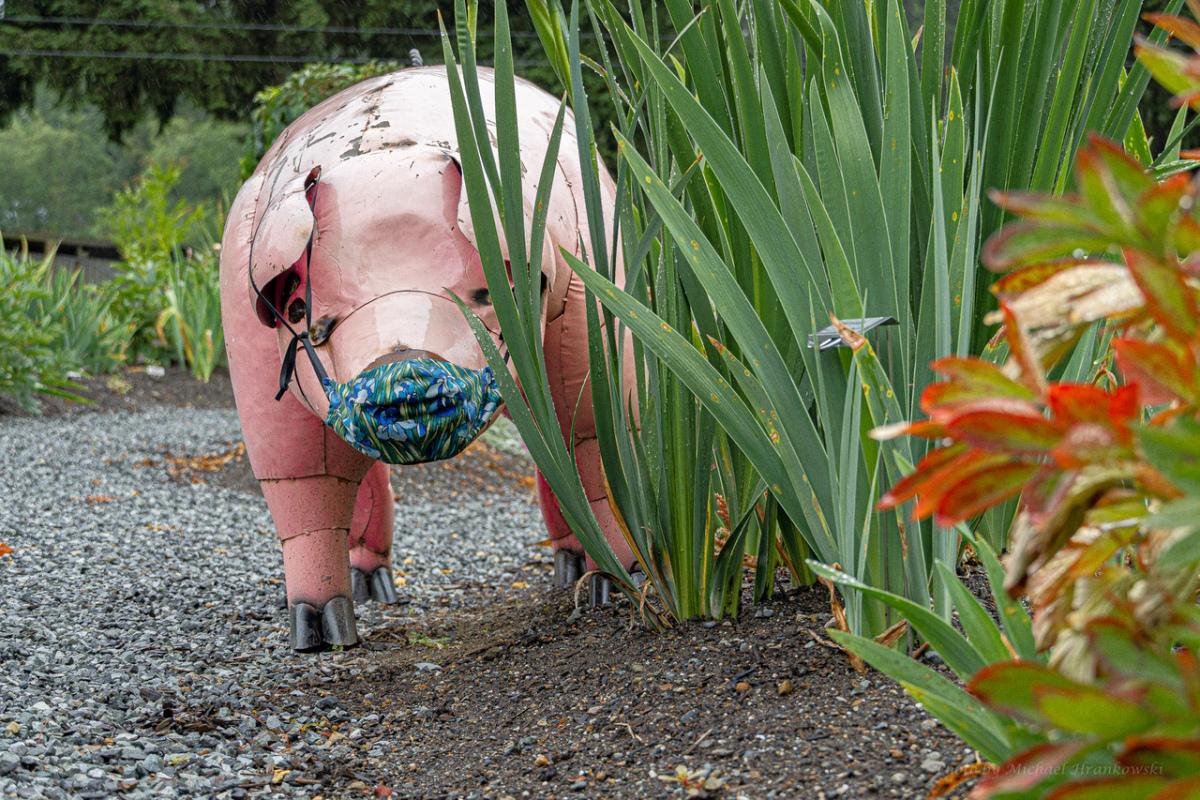 Iris Garden Pig