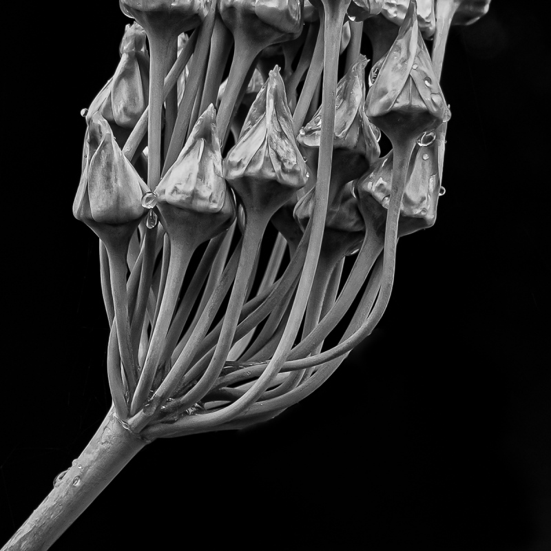 Seed Pods #2