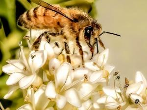 Bee-at-Work-Jack-Broom