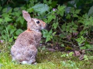 Bunny-Chris-Currie