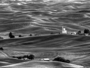Rolling-Hills-of-Steptoe-Lynne-Greenup