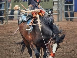 Saddle-Bronc-Riding-Dennis-Ostgard