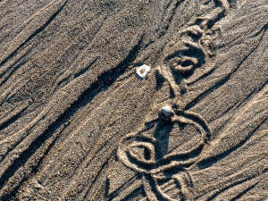 Snail-Tracks-Andy-Royce